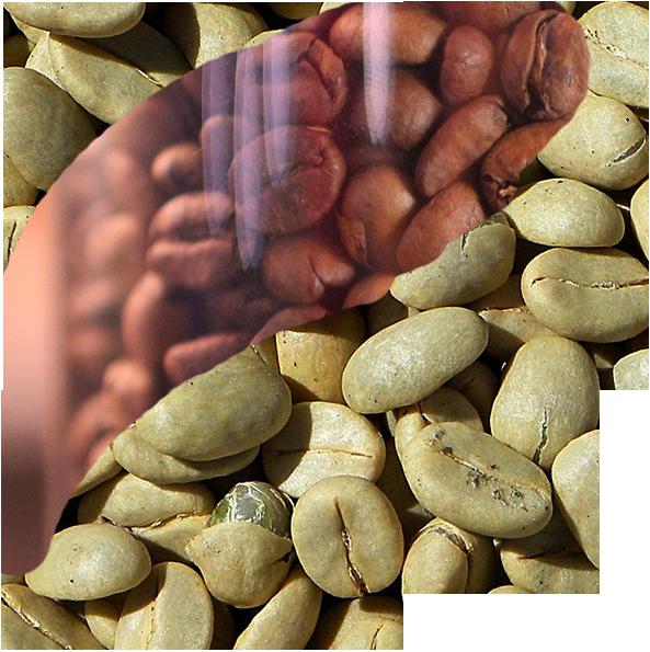 La botanique du cafe